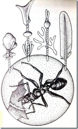32 Ant