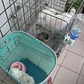 狗寶寶學吃飼料
