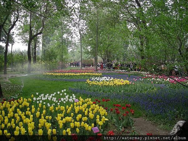 植物園-9
