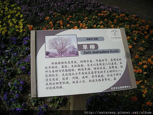 植物園-20