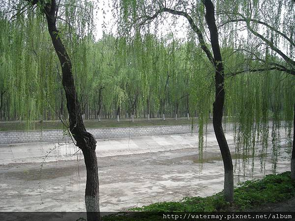 北京很美的柳樹