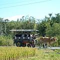 遠方的牛車
