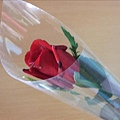 一枝獨秀玫瑰花