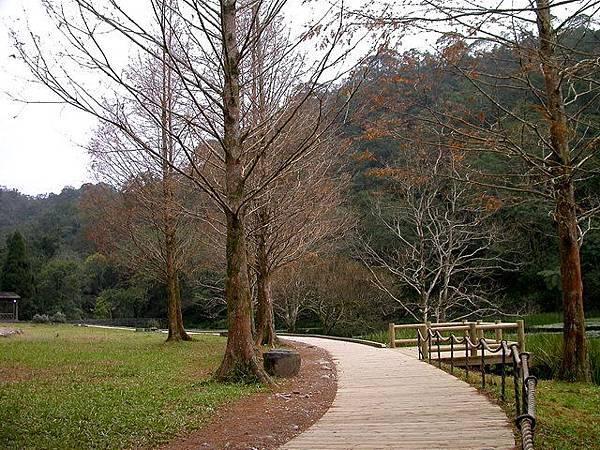 福山植物園_水杉
