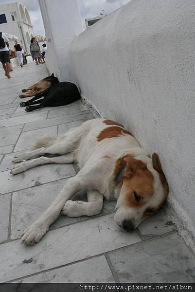 Dogs lives@Santorini