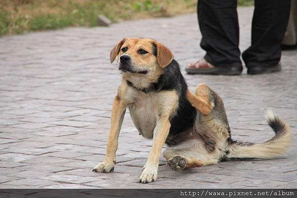A dog in Russia