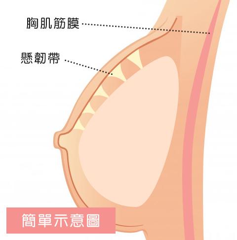 胸部軟2.jpg