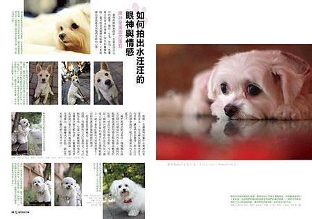 寵物攝影4_調整大小 .jpg
