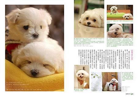 寵物攝影3_調整大小 .jpg