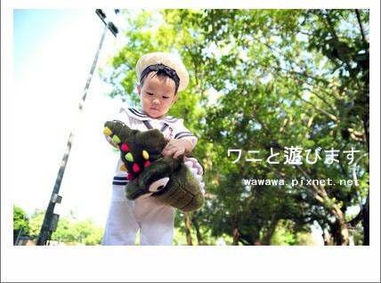 和鱷魚玩的小男孩.jpg