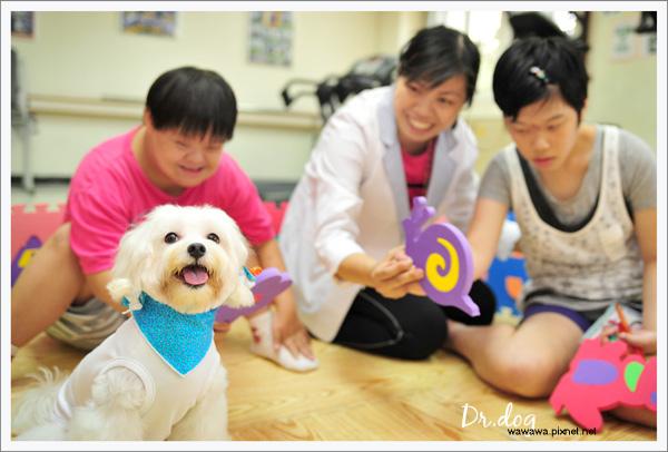Dr.dog高雄寶弟1.jpg