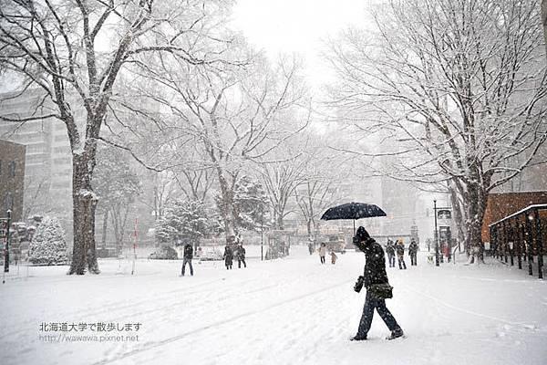 北海道大學雪中散步