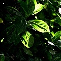 20090628-DSC_9253.jpg