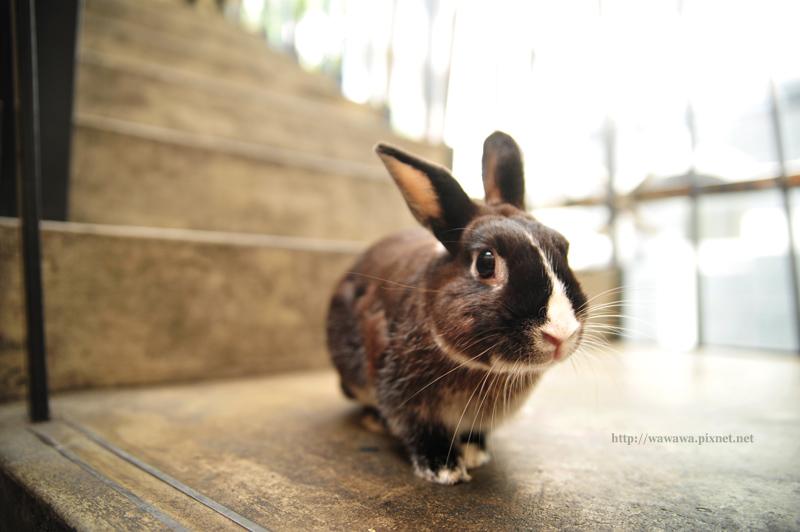 小兔胖胖_01.jpg