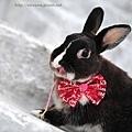 小兔胖胖_05.jpg