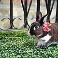 小兔胖胖_09.jpg