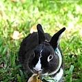 小兔胖胖_10.jpg