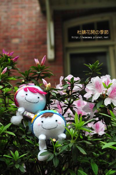 杜鵑花開的季節襪娃娃1.jpg