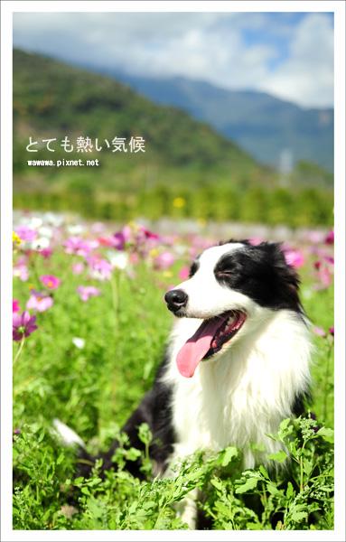 wawa台東小維_146s.jpg