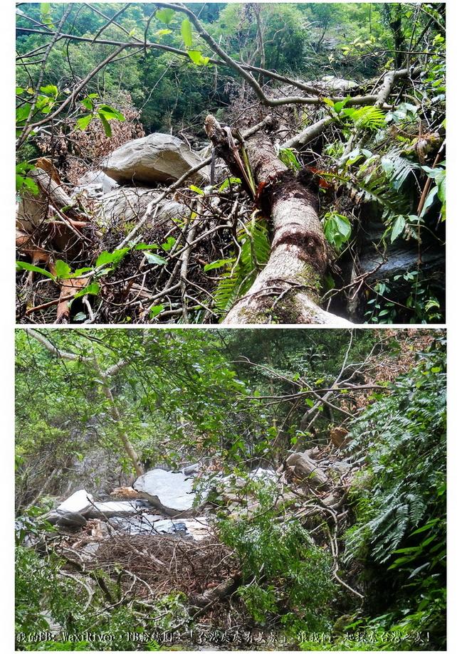 29 路程 澳花階梯 巨石倒木橫臥阻路 組合圖
