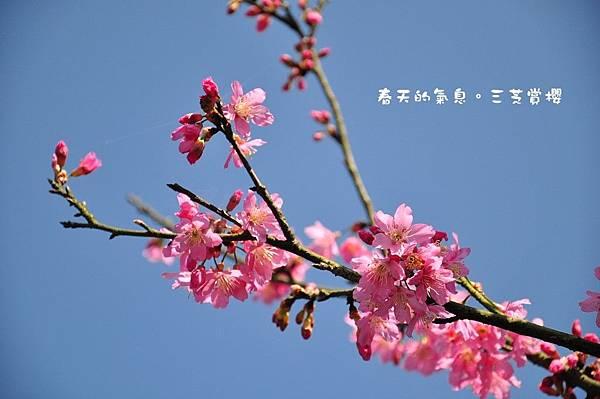 4-DSC_0069