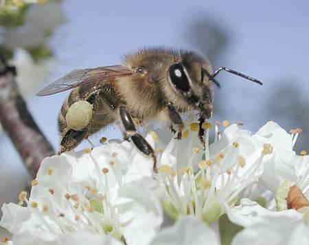 蜂蜜, 蜂蜜醋, 台灣伴手禮網友推薦, 有機天然
