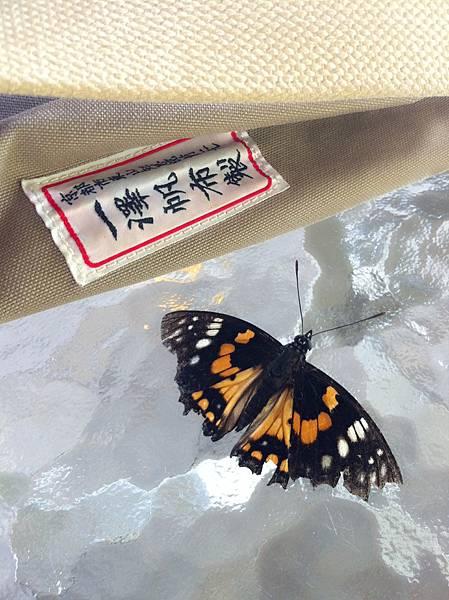 高巢生活(太平)