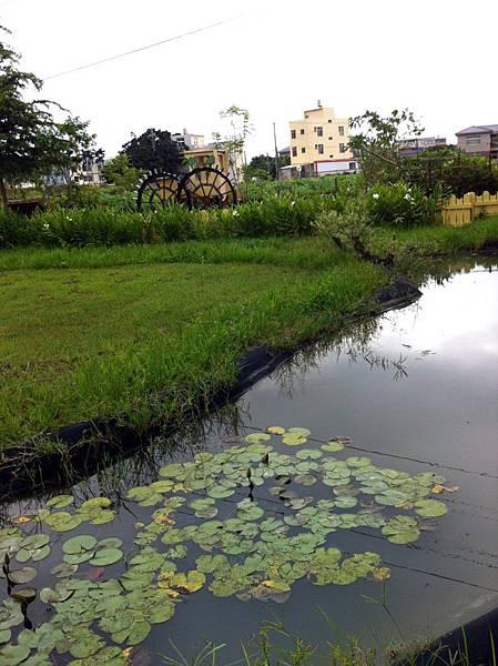 荷塘居風景5.JPG