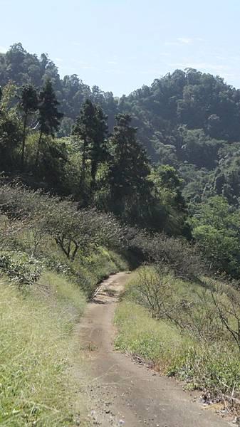 走入森林.JPG
