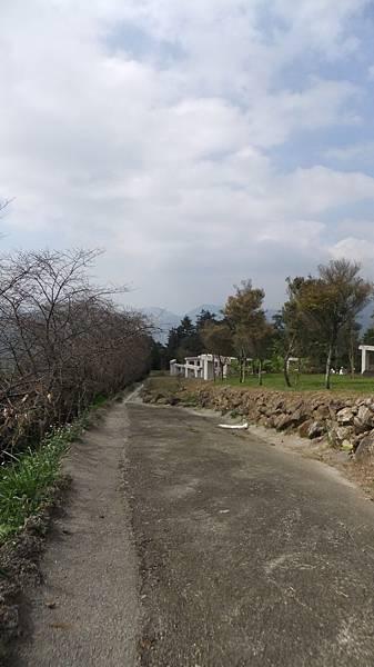 櫻花步道.JPG