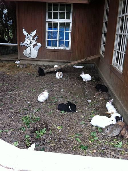 小兔的家.JPG