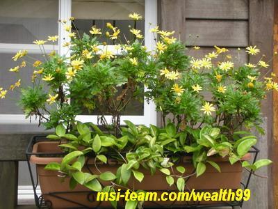 菁山遊憩區小木屋外的美麗盆栽(優莎納USANA-MSI嚴蕙娟拍攝)