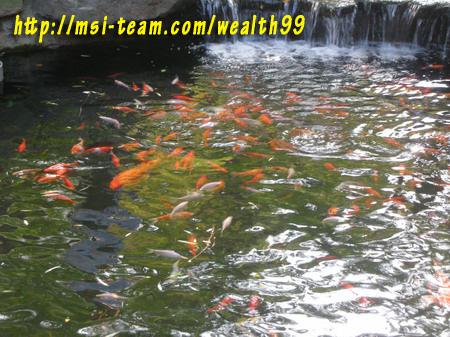 桃園耕讀園大大的漂亮魚池(優莎納USANA-MSI嚴蕙娟攝)