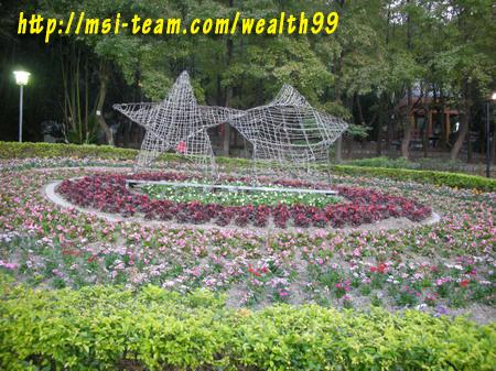 虎頭山公園的美麗花圃(優莎納USANA-MSI團隊嚴蕙娟攝)