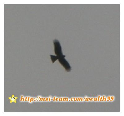 就在這邊看到兩隻猛禽,應該是老鷹吧?