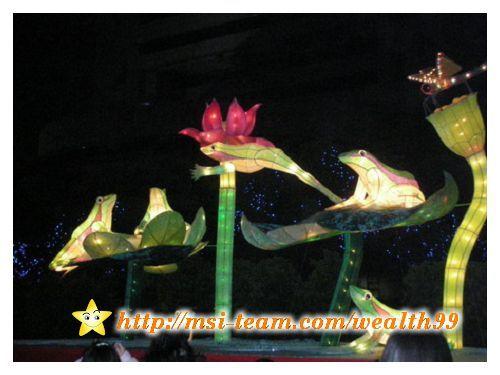 綠色精靈 台北赤蛙