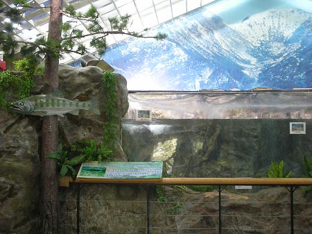 188櫻花鉤吻鮭生態中心.jpg