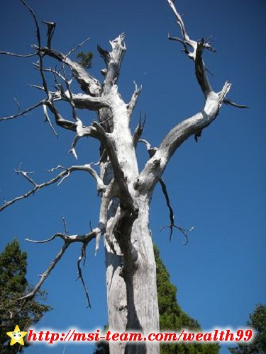 在枯掉的白木最上方,竟有一小叢綠意盎然的植物