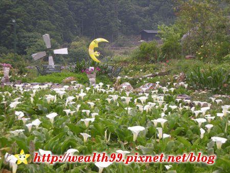 090510竹子湖海芋03(001).jpg