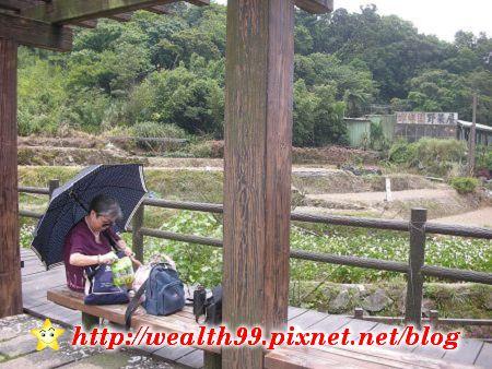 090510竹子湖海芋08(001).jpg