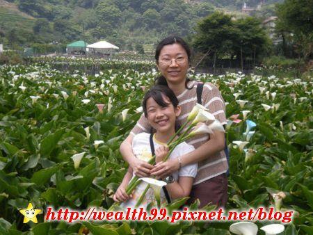 090510竹子湖海芋34(001).jpg