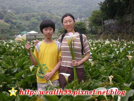 090510竹子湖海芋37(001).jpg