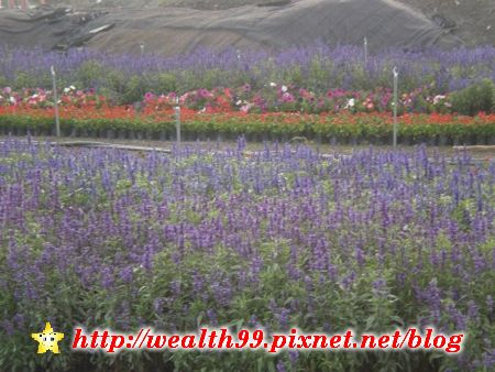 112田尾公路花園