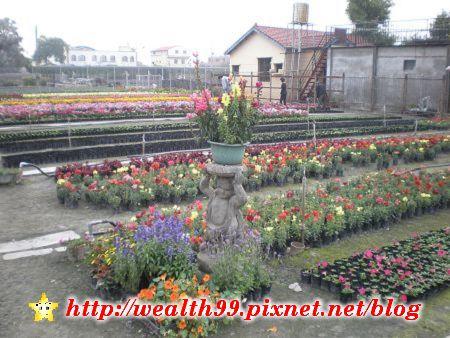103田尾公路花園.jpg