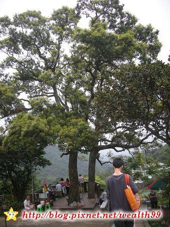 44夫妻樹.jpg