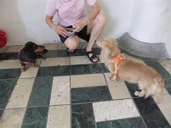 看到吃的兩隻眼睛發光的狗狗