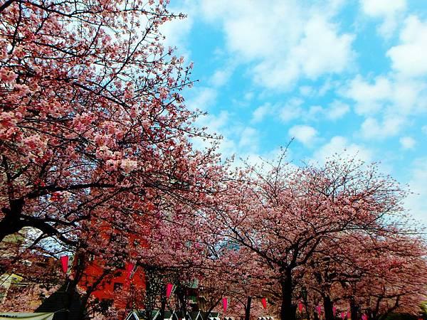 日本東京親子賞櫻首選~隅田公園,從淺草雷門,經隅田公園,再到晴空塔的悠閒親子賞櫻活動行程