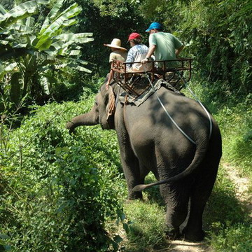 ElephantTrek