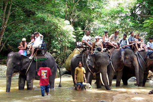 elephant-trek600c