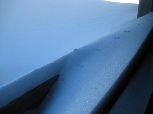 雪地上不時可以看到小動物的腳印, 真是可愛!!